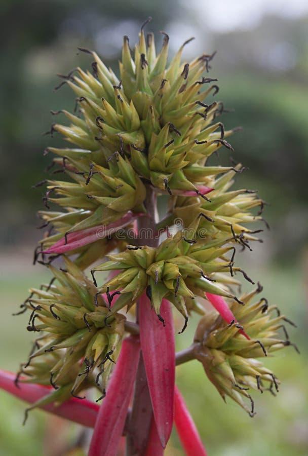 Giardino di Xeriscape a Caracas Venezuela immagini stock