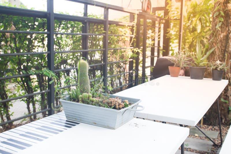 Giardino domestico o all'aperto del caffè con luce solare fotografie stock