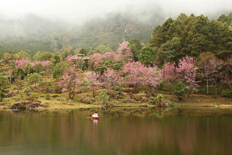 Giardino e lago di Sakura fotografia stock