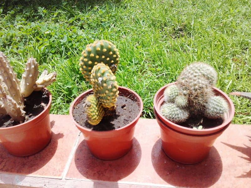 Giardino esotico del cactus delle piante fotografie stock libere da diritti