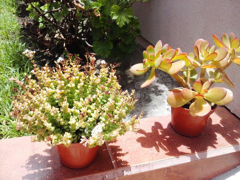 Giardino esotico dell'agave del cactus delle piante immagini stock