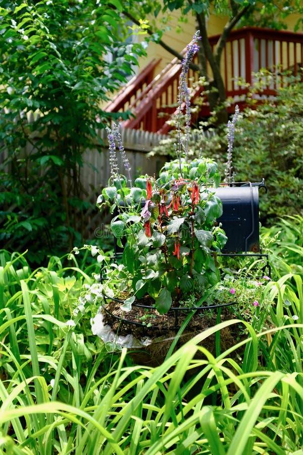 Piante di giardino decorative rosse fotografia stock for Piante decorative