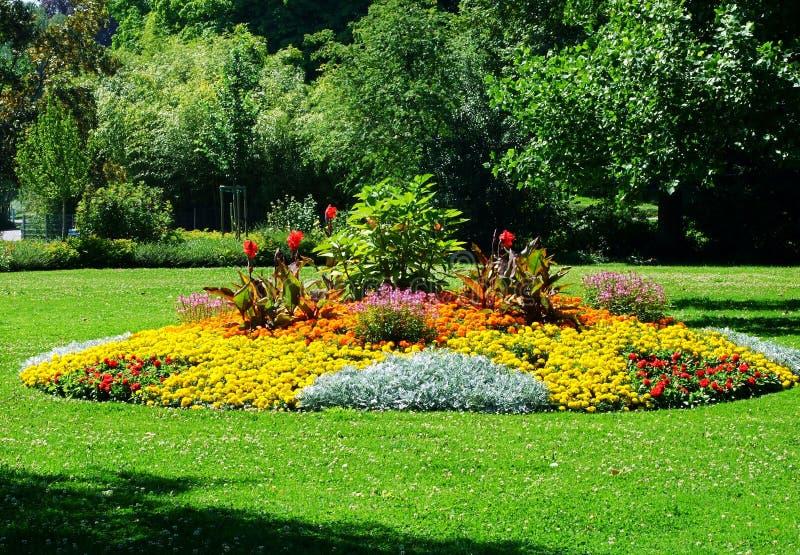 giardino, fiore, parco, molla, fiori, natura, paesaggio, verde, estate, albero, erba, campo, giallo, bello, tulipano, pianta immagini stock libere da diritti