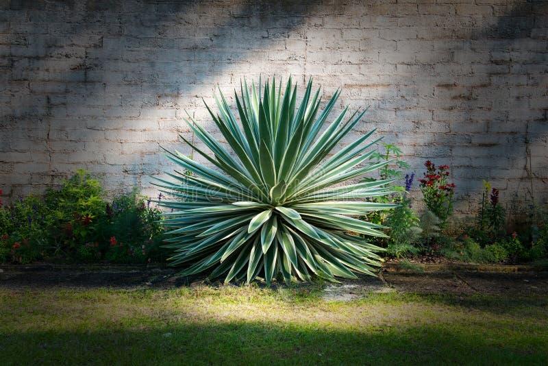 Giardino floreale della pianta di stile del cactus immagini stock libere da diritti