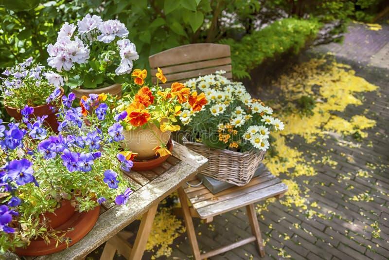 Giardino floreale di estate fotografie stock libere da diritti