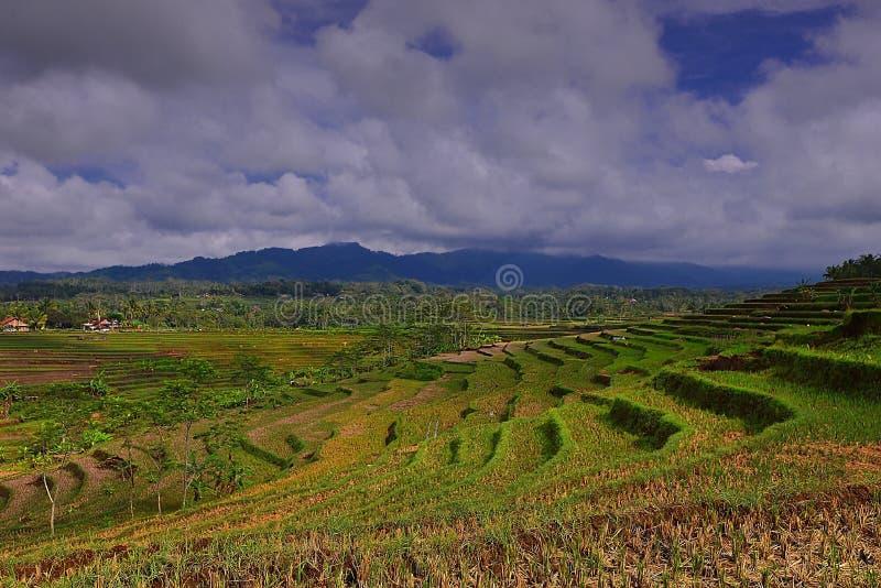Giardino floreale di Silancur Magelang meraviglioso Indonesia immagini stock