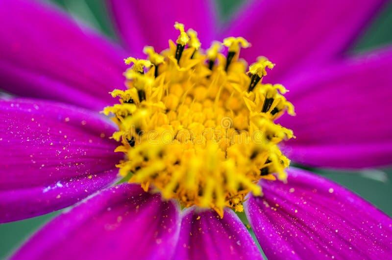 Giardino floreale porpora fotografie stock libere da diritti