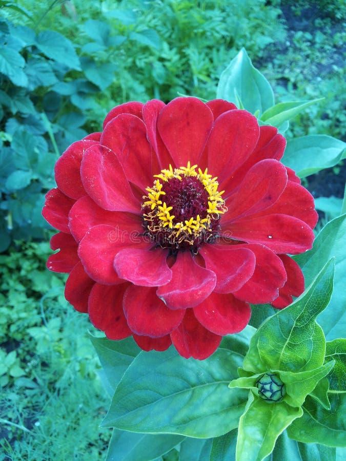 Giardino floreale rosso immagine stock libera da diritti