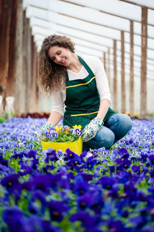 giardino floreale viola fotografia stock libera da diritti