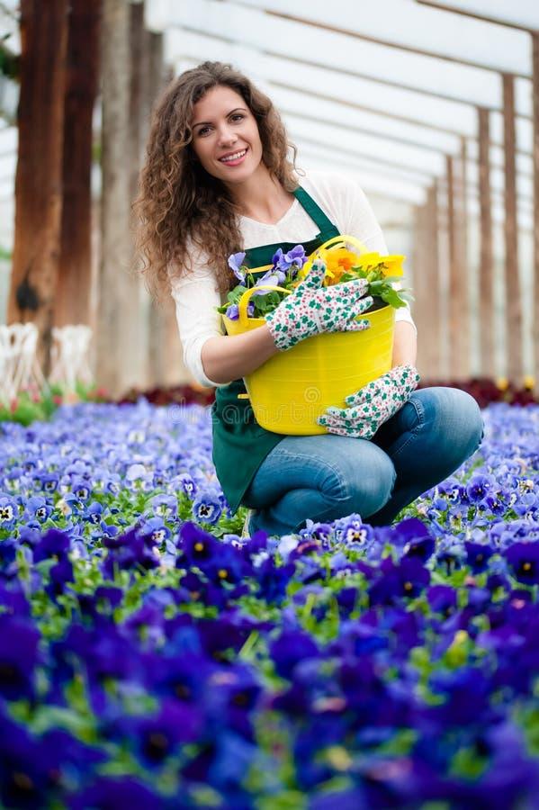 giardino floreale viola fotografie stock