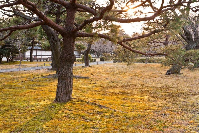 Download Giardino giapponese fotografia stock. Immagine di cespuglio - 30828884