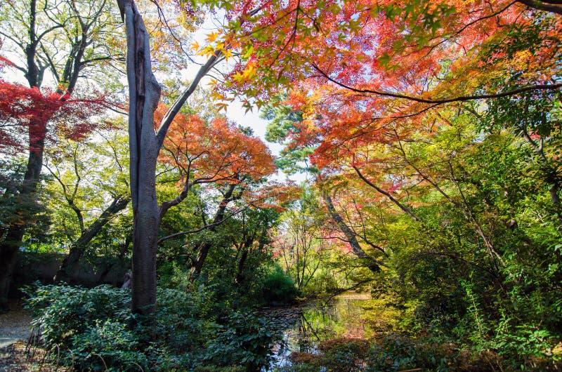 Giardino giapponese in autunno fotografia stock libera da diritti