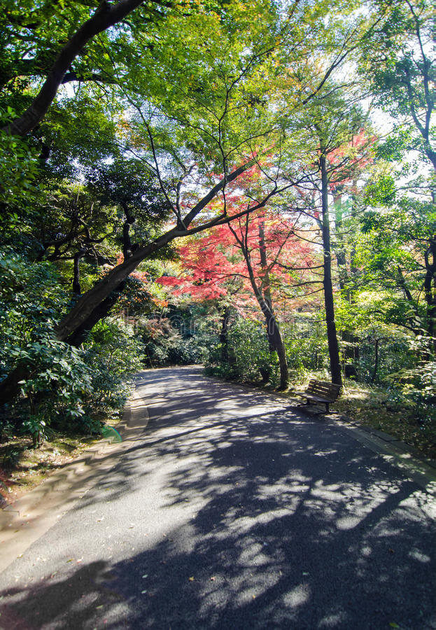 Giardino giapponese in autunno, Tokyo, Giappone fotografia stock