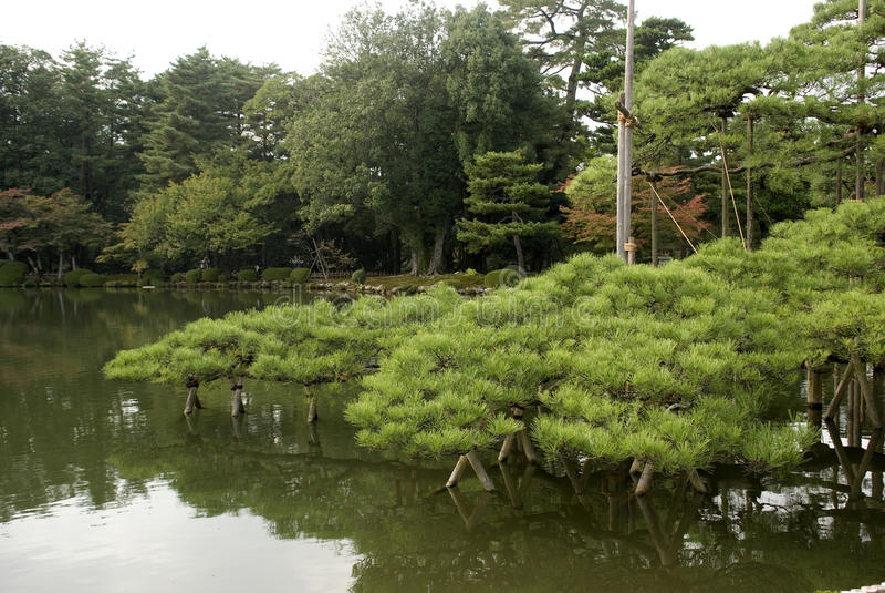 Giardino giapponese, Kanazawa, Giappone immagine stock libera da diritti
