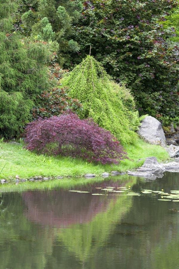 Piante per giardino giapponese free piante contro gli zombie ottenere piante da giardino zen - Piante per giardino giapponese ...
