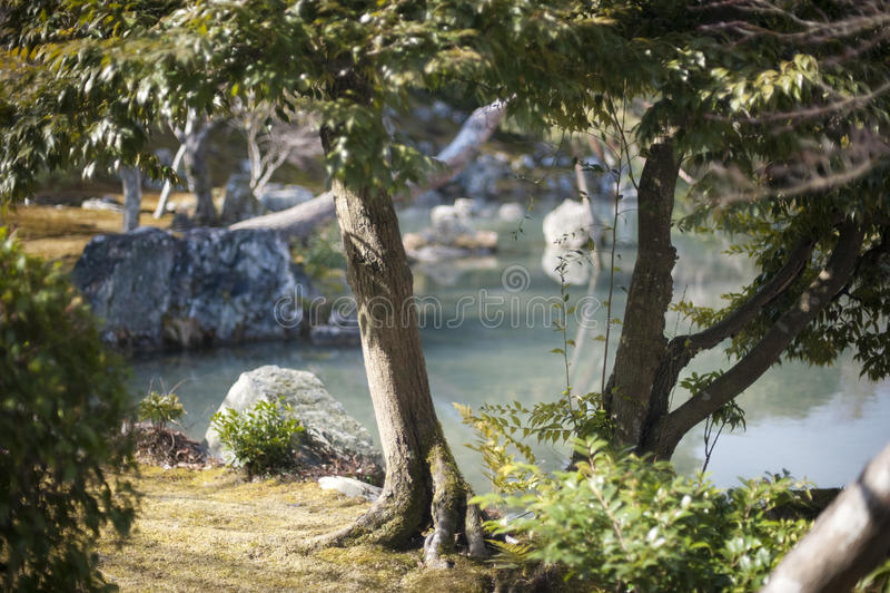 Giardino giapponese tranquillo di zen con lo stagno fotografia stock