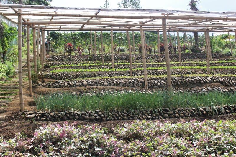 Giardino ideale da diventare nelle aree della regione montana fotografia stock libera da diritti