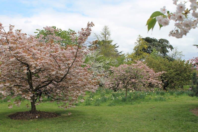 Giardino Londra Regno Unito di Kew fotografie stock libere da diritti