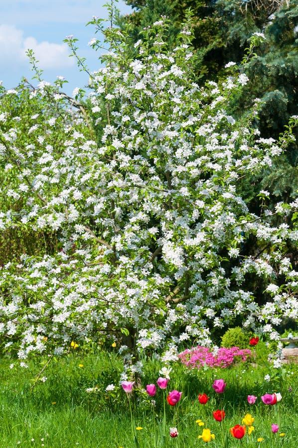 Giardino magnifico in primavera fotografia stock