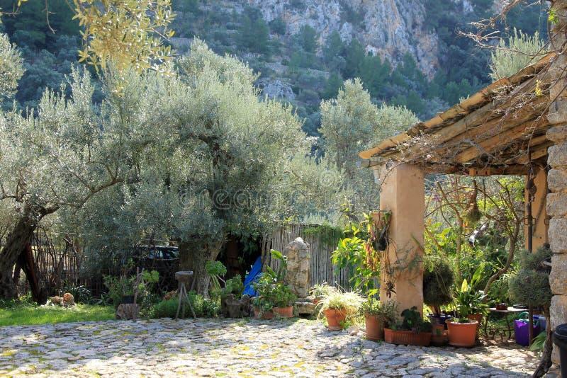 Giardino Mediterraneo con le piante e di olivo contro il contesto delle montagne di Tramuntana in Mallorca fotografia stock libera da diritti