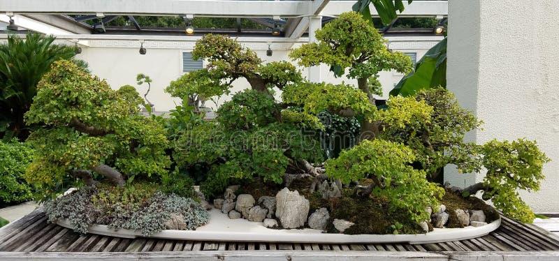 Giardino miniatura dei bonsai fotografia stock libera da diritti