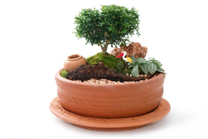 Giardino miniatura in un vaso immagine stock immagine di disegno roccioso 68991983 - Giardino in miniatura ...