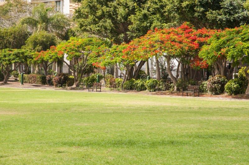 Giardino molto grande sull'isola di La Gomera immagini stock libere da diritti