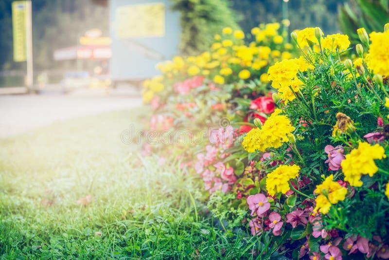 Giardino o parco di estate che abbellisce con il bello letto di fiori fotografie stock