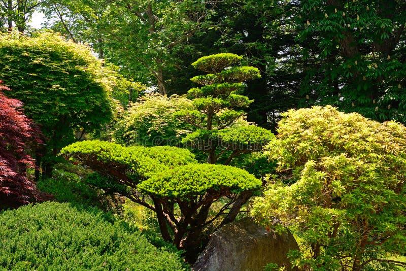 Giardino, Oshino, Giappone fotografie stock