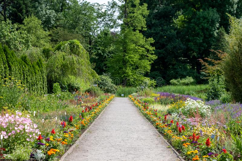 Giardino in pieno dei fiori al giardino botanico dell'università Jagellonica, Cracovia, Polonia Fotografato di estate fotografia stock libera da diritti