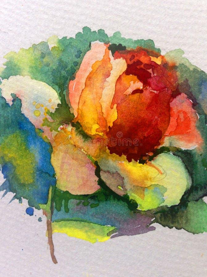Giardino rosa giallo rosso della rosa variopinta del fiore del fondo di arte dell'acquerello singolo illustrazione di stock