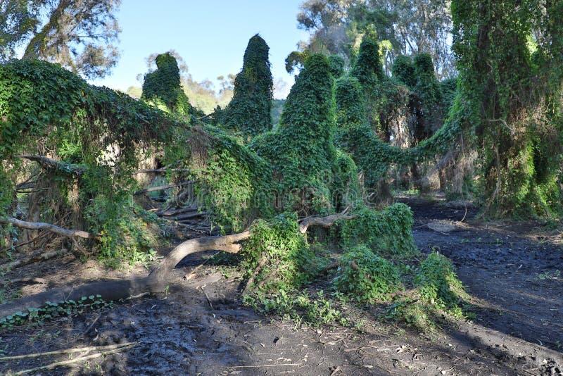 Giardino segreto di Perth fotografie stock