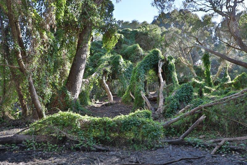 Giardino segreto di Perth fotografia stock