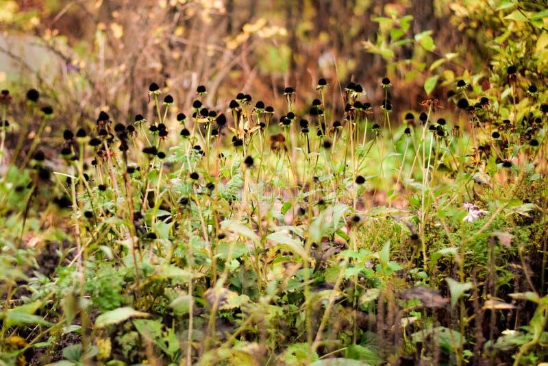 Giardino segreto nascosto in autunno fotografia stock