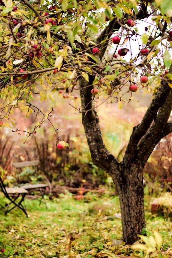 Giardino segreto nascosto in autunno immagine stock