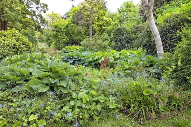 Giardino selvaggio di estate del terreno boscoso con vegetazione fertile fotografie stock