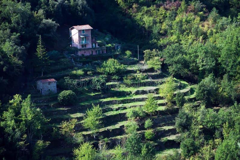 Giardino A Terrazze Sulla Collina Della Montagna Immagine Stock ...