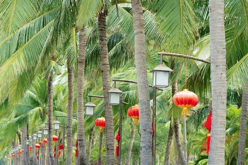Giardino tropicale immagine stock immagine di cocos - Giardino tropicale ...