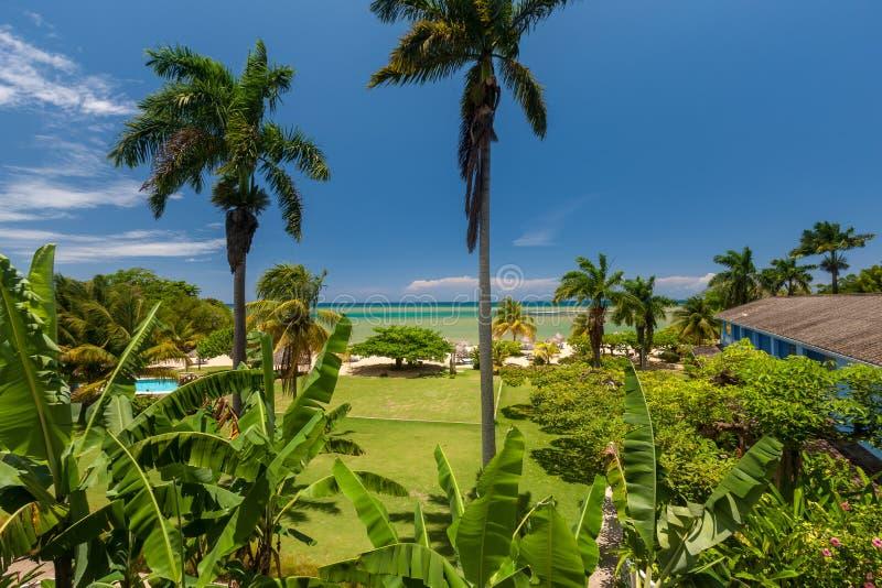 Giardino tropicale con i fiori e la spiaggia immagine - Giardino tropicale ...