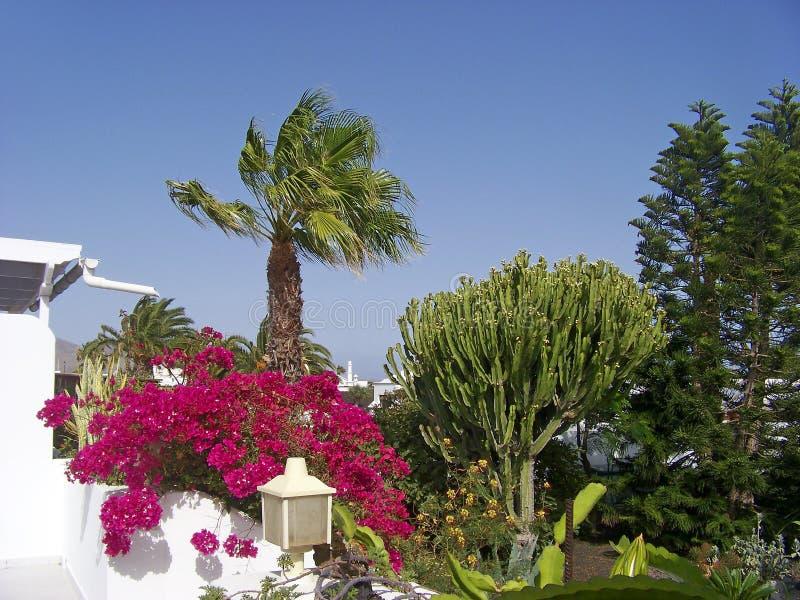Giardino tropicale con le palme e la buganvillea di - Giardino tropicale ...