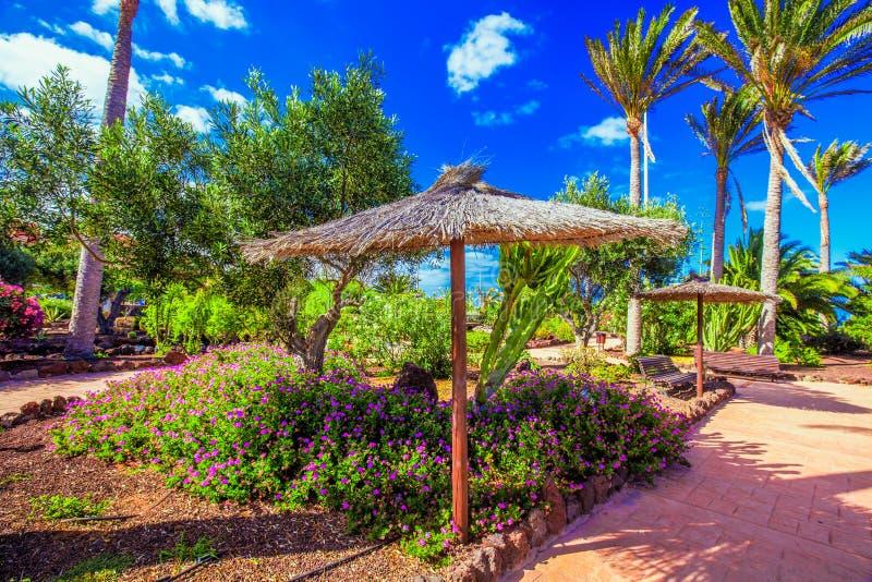 Giardino Tropicale Della Località Di Soggiorno Di Isola Con Le ...