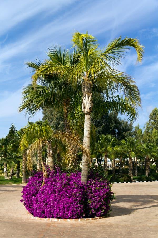 Giardino tropicale della palma con i fiori fotografia stock