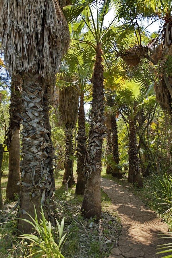 Giardino tropicale esotico con la palma in sun city - Giardino tropicale ...