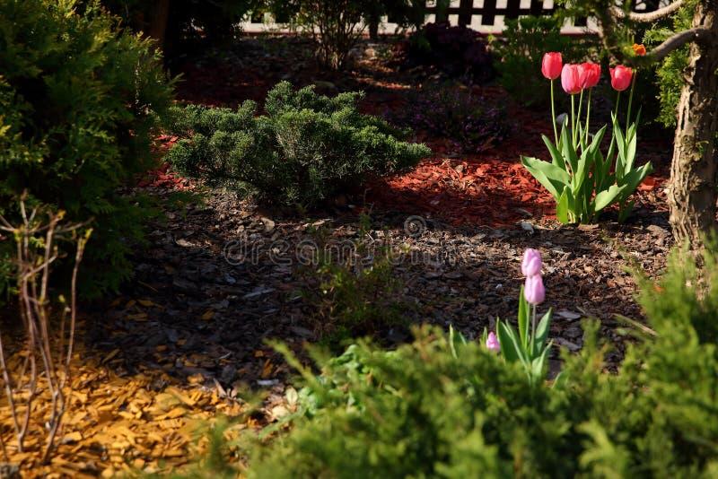 Giardino urbano illuminato dal sole della molla in cui i primi fiori stanno fiorendo immagine stock libera da diritti