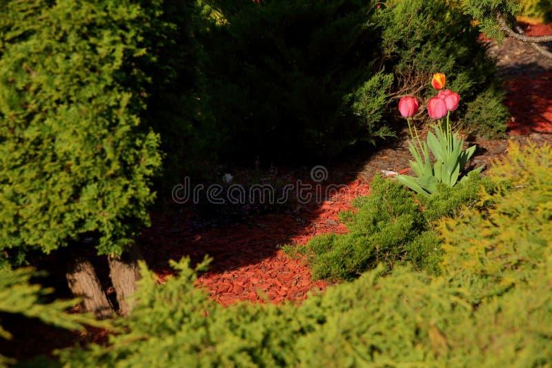 Giardino urbano illuminato dal sole della molla in cui i primi fiori stanno fiorendo fotografia stock