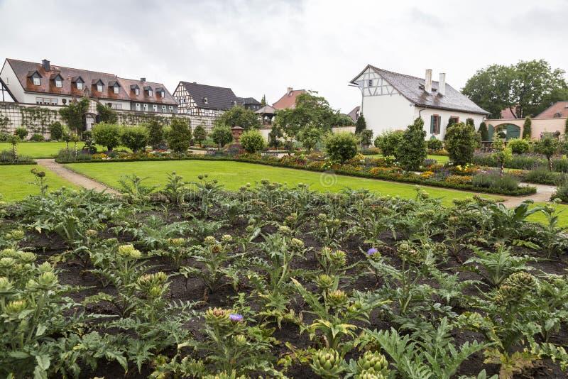 Giardino variopinto delle erbe e del parco medicinali Carciofo di fioritura fotografia stock