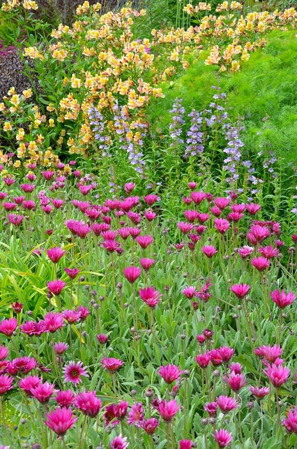 Giardino variopinto di estate fotografia stock libera da diritti