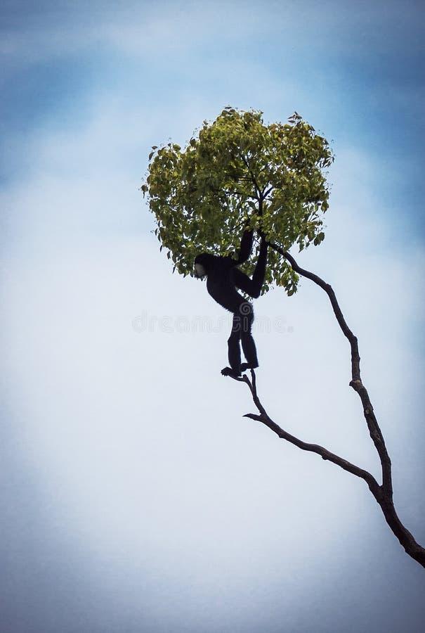 Gibbon en el árbol fotografía de archivo
