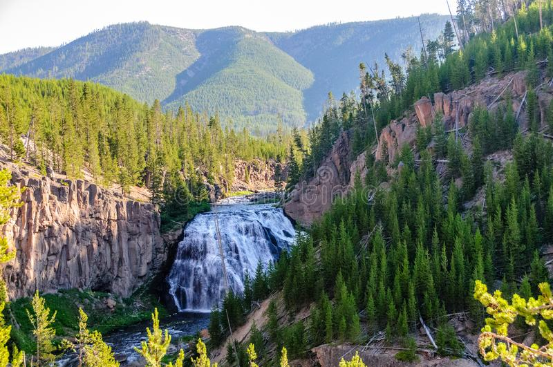 Gibbon Falls in Yellowstone National Park royalty free stock image
