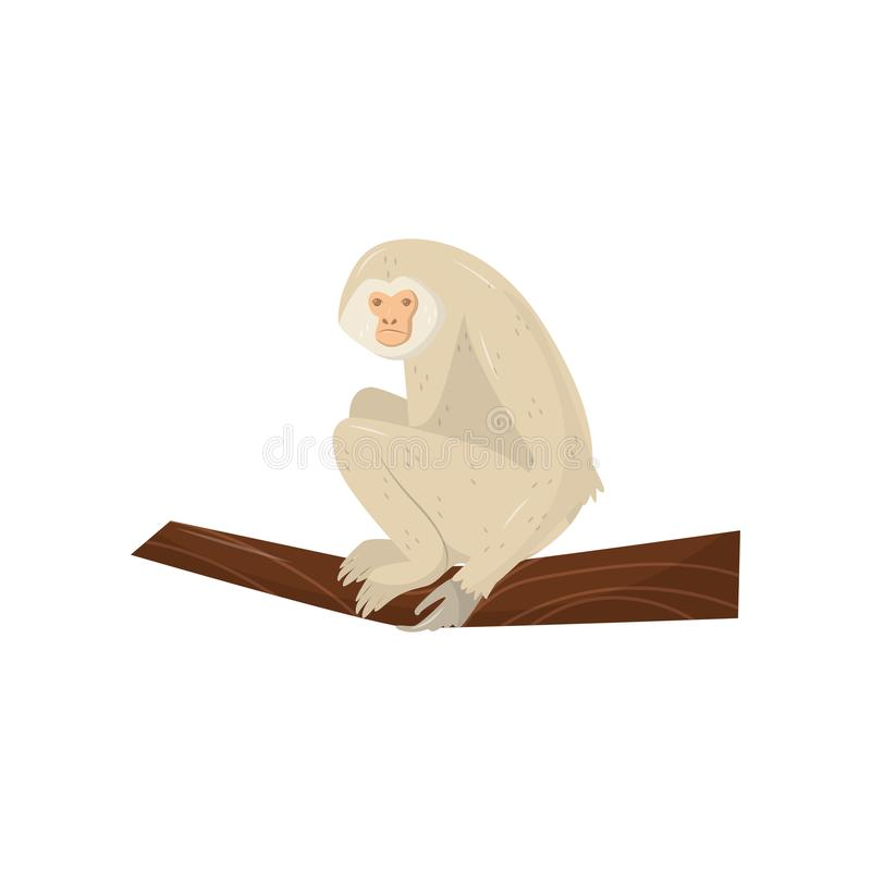 Gibbone beige che si siede sul ramo di legno Animale africano selvaggio Elemento piano di vettore per il manifesto di promo o l'a illustrazione di stock
